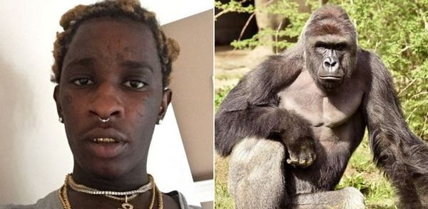 Young Thug Will Honor Slain Ape Harambe On 'Jeffery'