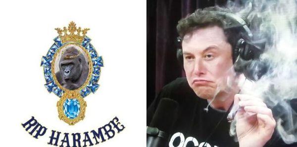 """Elon Musk Drops Rap Track """"RIP Harambe"""""""